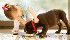 Haustier für Kind